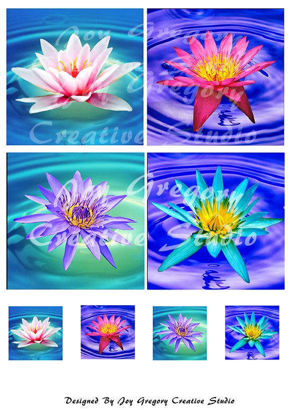 Coaster Images Waterlilies Collection 1 - 3.8 x 3.8 Inches