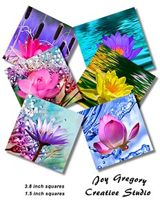 Square Coaster Images Waterlily
